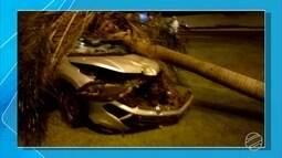 Carro bate em coqueiro em avenida de Campo Grande