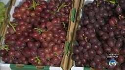 21ª edição da Festa da Uva é realizada em Pilar do Sul