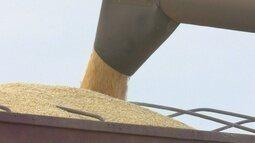 Projeção do IBGE aponta crescimento na safra de grãos em Rondônia