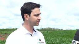 Agrônomo fala sobre os benefícios da agricultura de precisão; entenda
