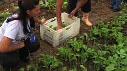 Restaurante Popular de Juazeiro do Norte realiza a primeira colheita