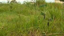 Terreno com mato alto causa problemas a moradores do Parque dos Girassóis