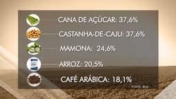 IBGE traça previsão positiva para a safra de 13 produtos agropecuários plantados na Bahia