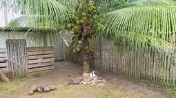 Parte 2: No Acre, produtores investem em plantação de coco
