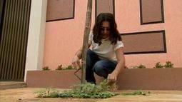 Saiba como ajudar no plantio de árvores de sua cidade e contribuir para o meio ambiente