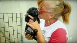 Repórter Mirante destaca força do voluntariado a cães e gatos