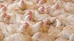MS aparece na lista com dois frigoríficos proibidos de exportar frango para UE