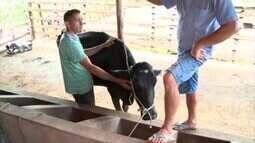 Enchentes causam prejuízos para produtores de leite de São José do Divino