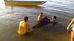 Filhote de baleia encalha em São João da Barra, no RJ