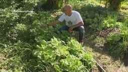 Parte 2: Hortaliças orgânicas ganham espaço em hortas de produtores de Roraima