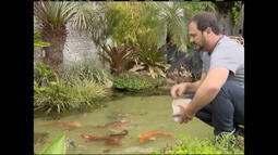 Coluna 'É o Bicho' mostra histórias de apaixonados por peixes