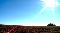 Agricultores aproveitam dias de sol e tempo seco para acelerar produção do trigo