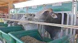 Criadores de bovino se preparam para a chegada do inverno em MS