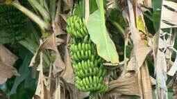 Produtores do Centro-Oeste aproveitam bom momento da agricultura familiar no Brasil