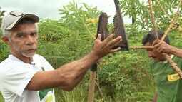População no interior do MA inventam equipamentos para melhorar a vida de agricultores
