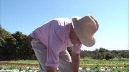 Grupo da zona rural de Montes Claros adere a produção sem o uso de agrotóxicos