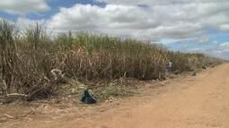 IBGE prevê aumento de 12,8% da produção agrícola do estado este ano, em relação a 2017