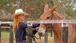 A criação de mulas para a lida no campo