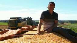 Começa a colheita de milho no Paraná com estimativa de queda de produção