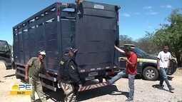 PRF faz ações para recolher animais de rodovias federais no Sertão