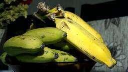 Produtores de Piau utilizam câmaras frias para regular oferta de banana no mercado