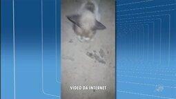 Gatos são envenenados em um gesto de maldade, em cemitério de Juazeiro do Norte