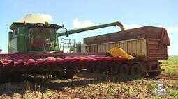 Segundo estimativa da Conab, soja deve ter aumento na produção em Rondônia