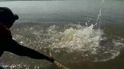 Boto vermelho é resgatado de rede de pesca no interior do AM