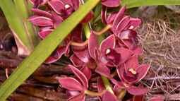 Festival de orquídeas é realizado em pousada localizada em Guararema