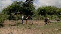 Famílias de Chorozinho reutilizam água das casas para a irrigação