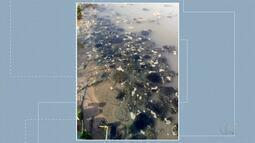 Veja a resposta da prefeitura de Palmas sobre a lama na praia das Arnos