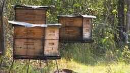 Morte de enxames preocupa apicultores paulistas