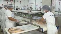 Parte 2: Pesquisa transforma restos de peixe em biocombustível