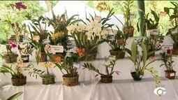 Mais uma edição da exposição de orquídeas e bromélias de Alagoas é realizada em Maceió