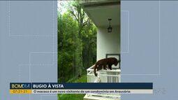 Macaco é novo visitante de condomínio em Araucária
