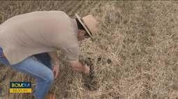 Veja as principais notícias do agronegócio paranaense