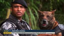 Cães policiais e sua relação de lealdade com os parceiros de trabalho
