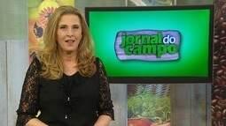 Produtor investe em produção de uva em Cariacica