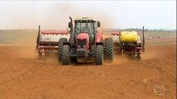 Começa o plantio de milho verão em MG