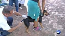 Donos de cães e gatos devem manter vacinação antirrábica em dia para os animais