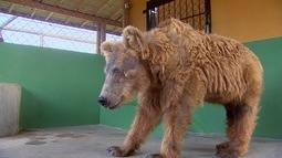 Após anos de maus tratos, a ursa Rowena tem uma nova história e recebe muito amor