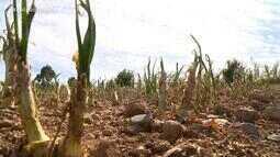 Agricultores da Serra do RS ainda contabilizam estragos causados pelo granizo