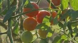 Setor de orgânicos deve crescer este ano em Marília