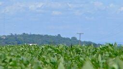 Cautela tem marcado a comercialização de soja em MT