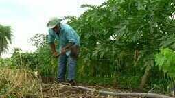 Agricultor familiar investe em produtos diversificados para gerar renda