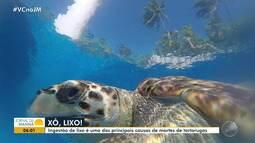 'Xô, lixo': ingestão de lixo é uma das principais causas de mortes de tartarugas