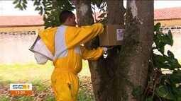 Projeto ajuda a combater ataque de abelhas