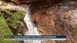 Águas de bosque podem estar contaminadas com urina de rato
