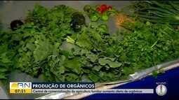 Central de comercialização da agricultura familiar aumenta oferta de produtos orgânico