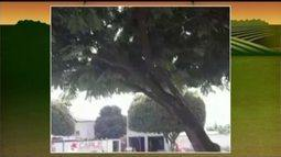 Doutora em botânica esclarece dúvida de telespectadora sobre árvore que libera água